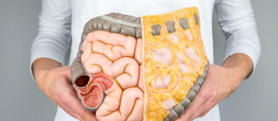 trato digestivo
